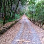 riserva tirone parco nazionale del vesuvio scheda 150x150