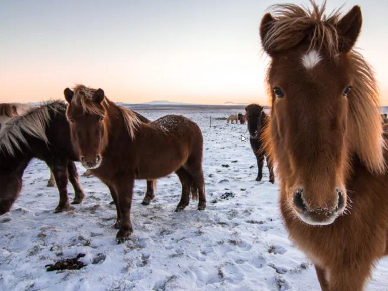 horse 768x576