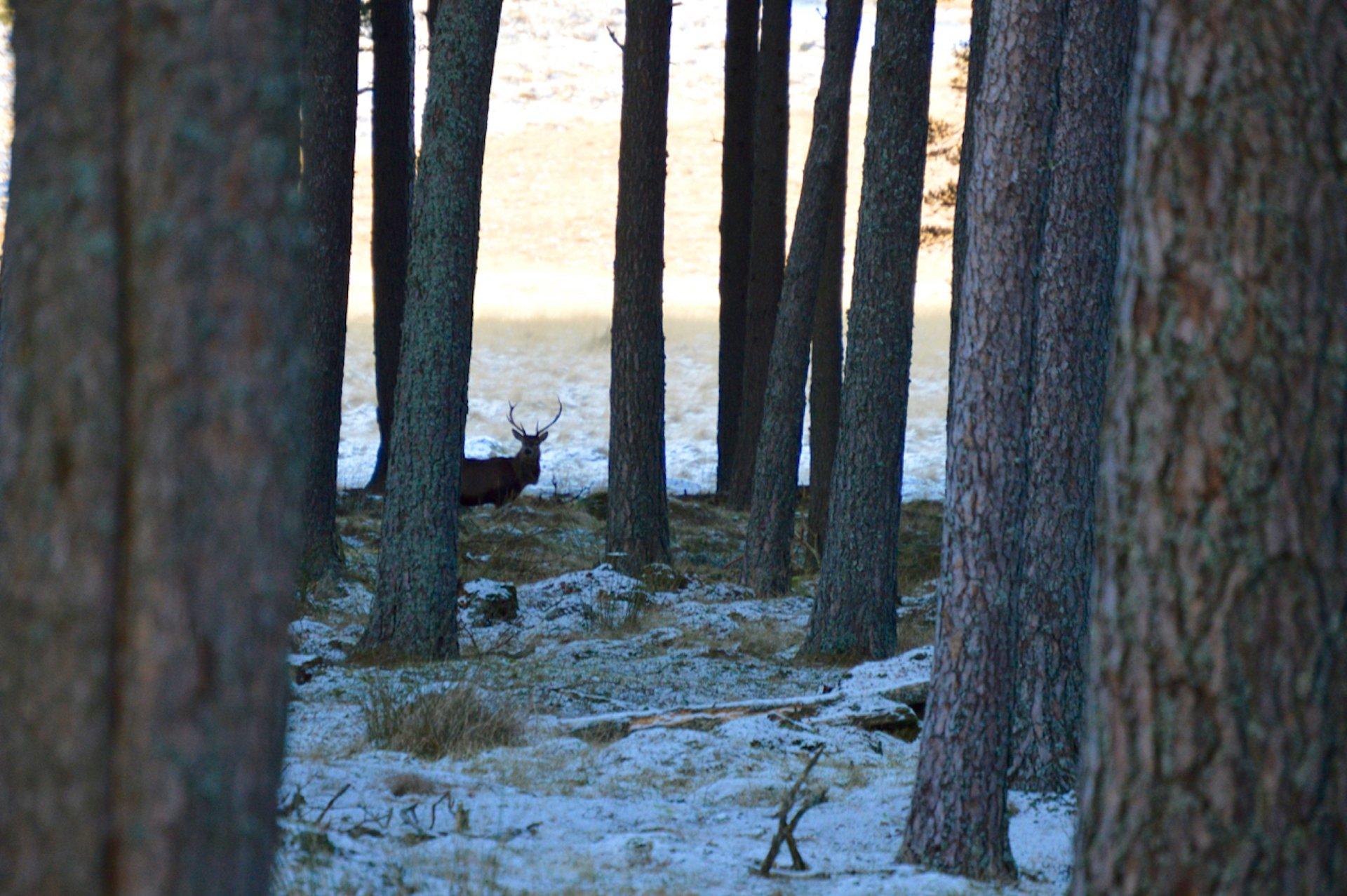 EDNUGGET wildlife winter deer vacation great britain stag scotland highlands balmoral t20 YX9P7R