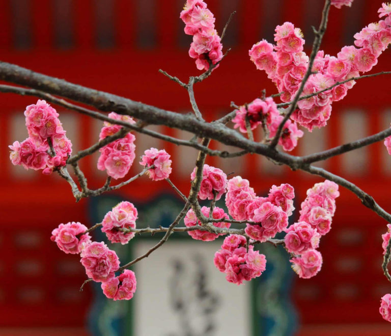 JAPAN: Inspiring Tree Traditions