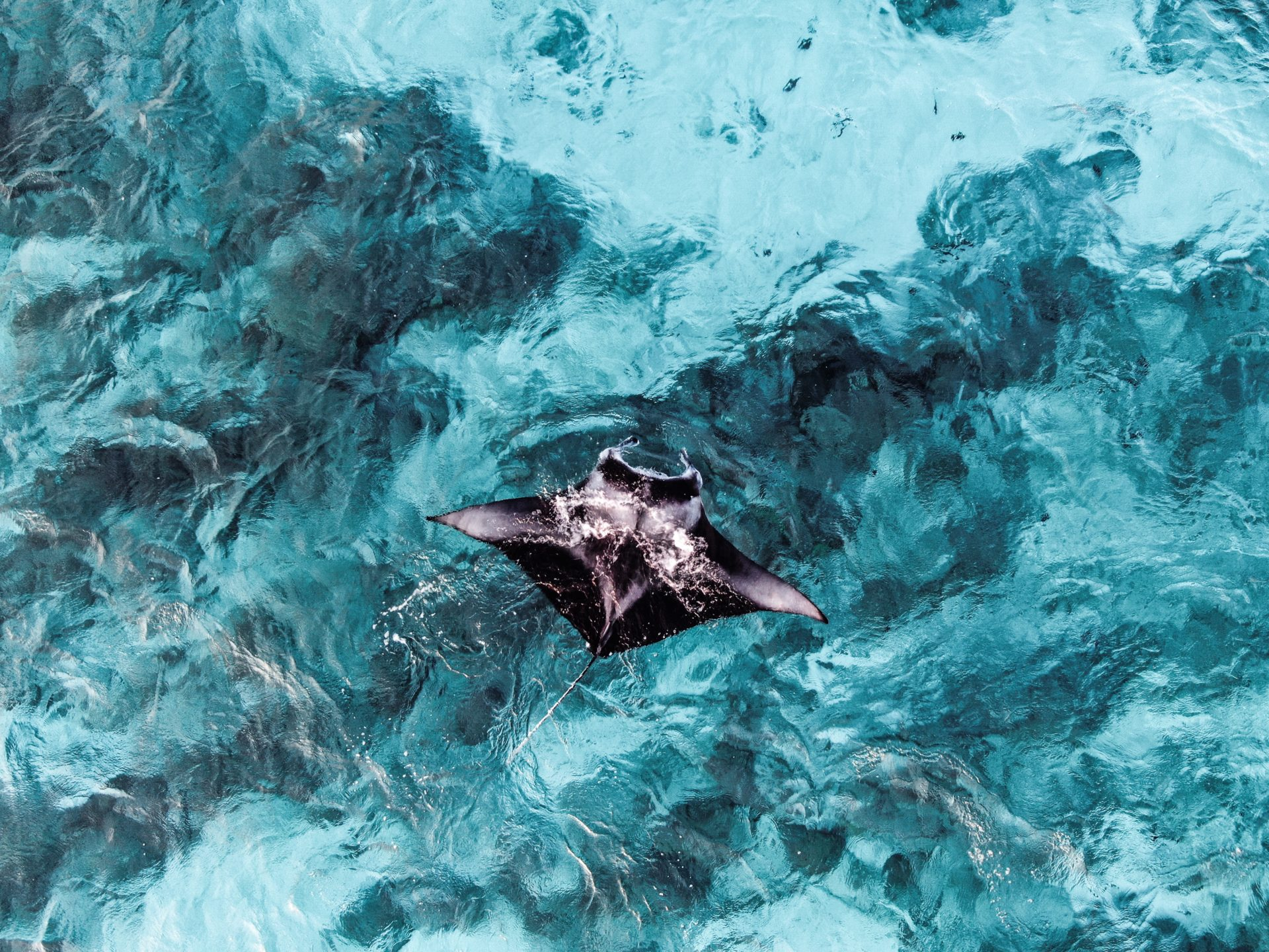 Positive Ocean Manta Ray