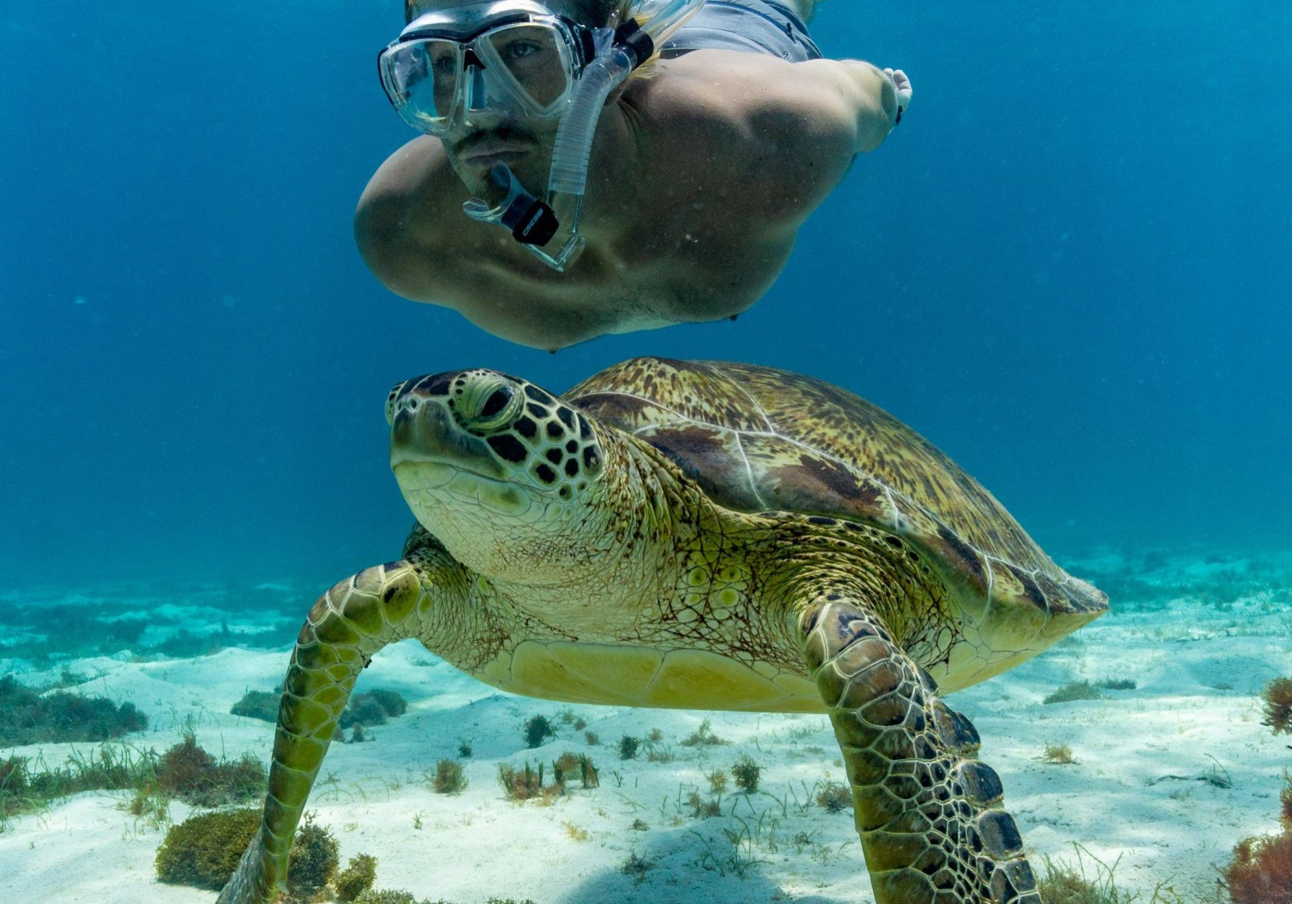 Andy-Petts-Green-Turtle-Snorkel-St-Vincent-Grenadines