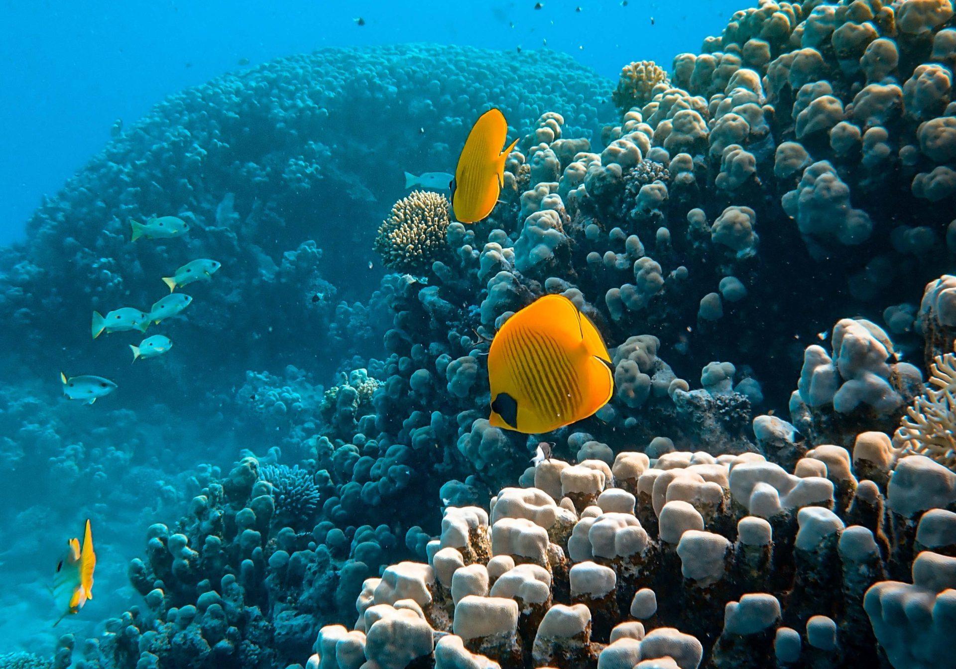 Positive Ocean Angelfish