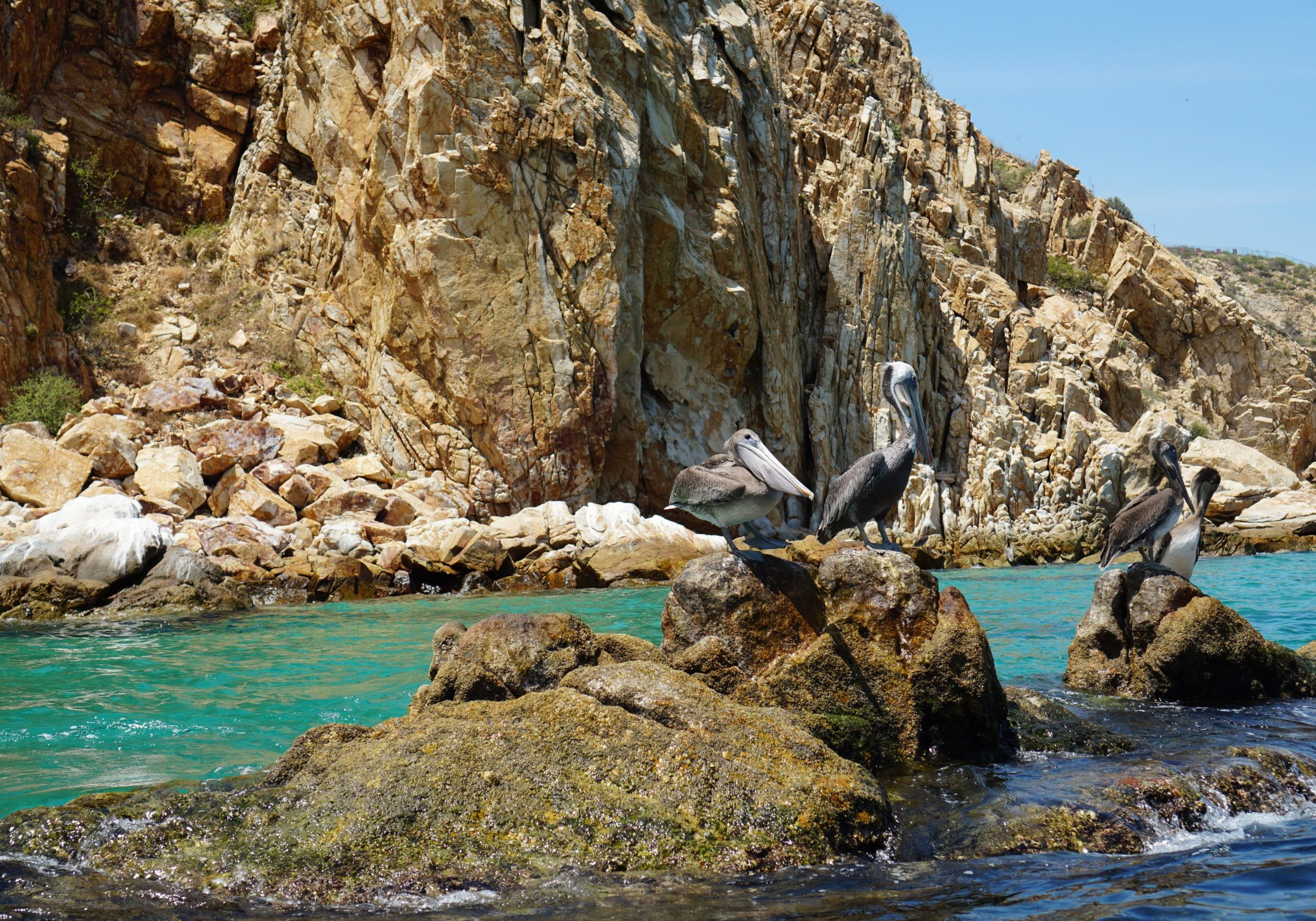 Photo by: Salvador Navarro-Maldonado / Los Cabos, Mexico